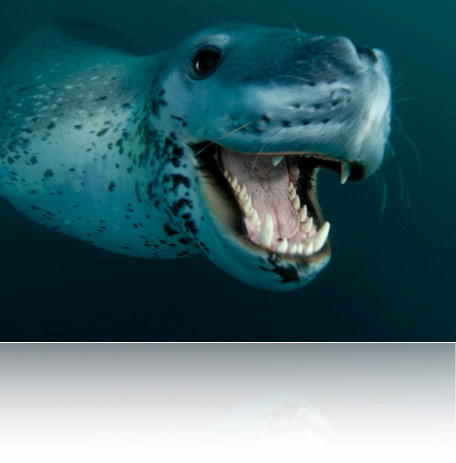 Scientific Writer Sea Leopard Project